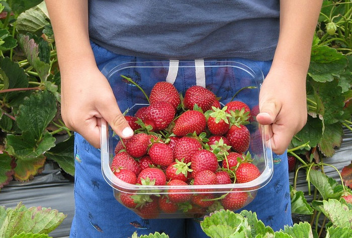 여름철 과일 수확위해 외국인 노동자 투입한다