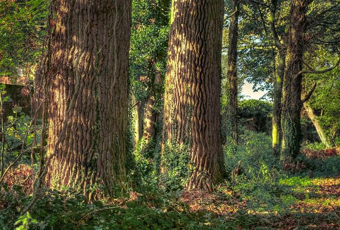 원주민들, 삼림 벌목 작업 중지 요청