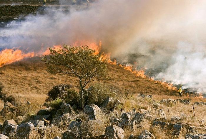 고온과 가뭄 그리고 강풍…산불 확산 '주범'